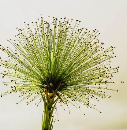 flower-2071522_1280